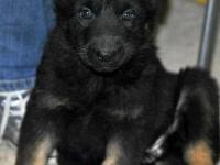 Ella puppy