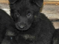 Ella puppy1
